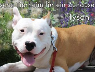 Listenhunde Und Kampfhunde Vermittlung Und Bundesweite Informationen